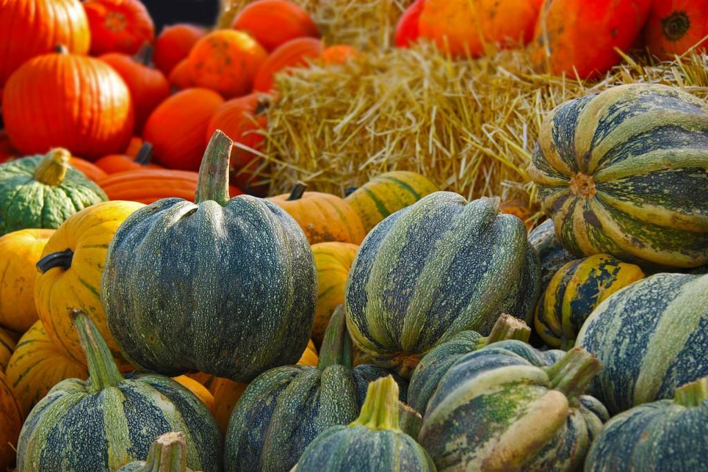 pumpkin-567689_1280